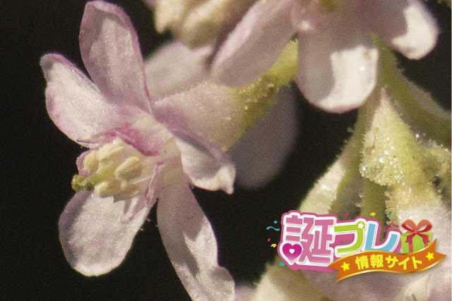 スグリの花の画像