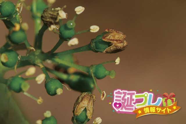 葡萄の花の画像