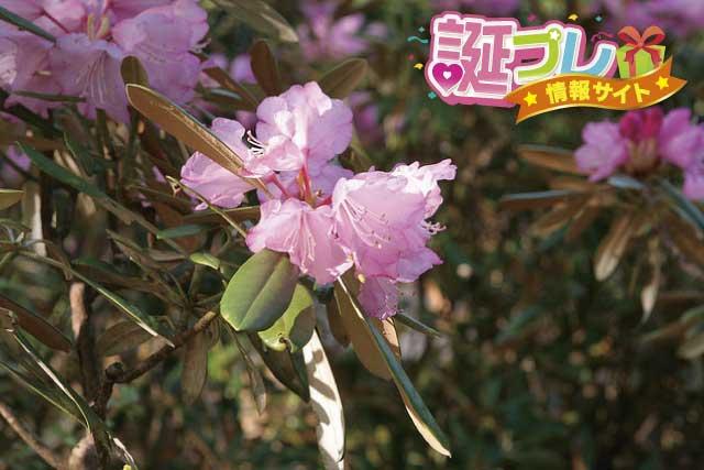野草の花の画像