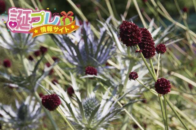 吾亦紅の花の画像