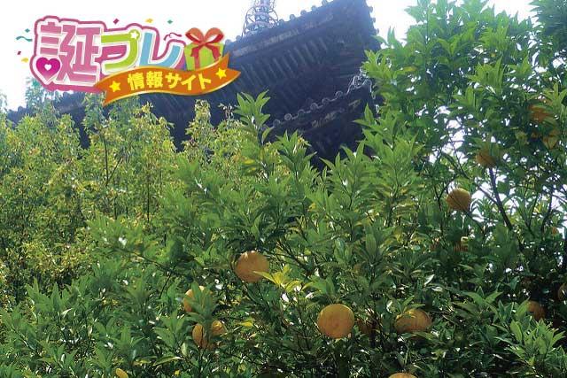花柚子の画像