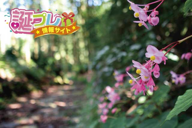 秋海棠の画像