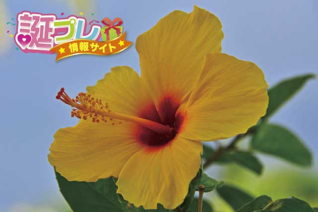 ハワイアンハイビスカスの画像