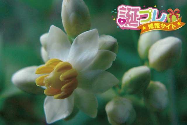 南天の花の画像