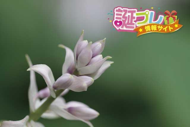 ギボウシの花の画像