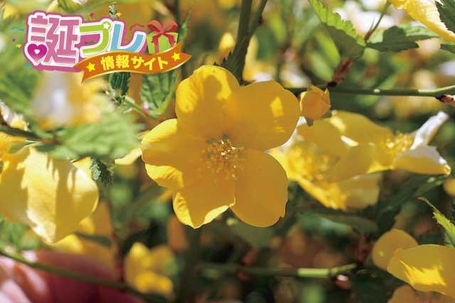 山吹の花の画像