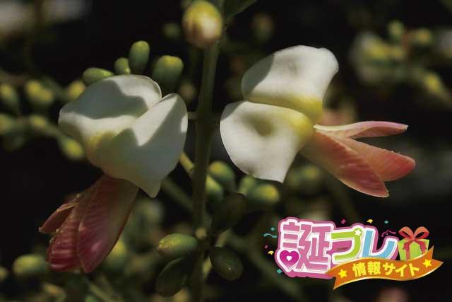 槐の花の画像