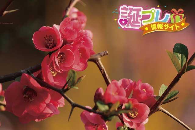 木瓜の花の画像