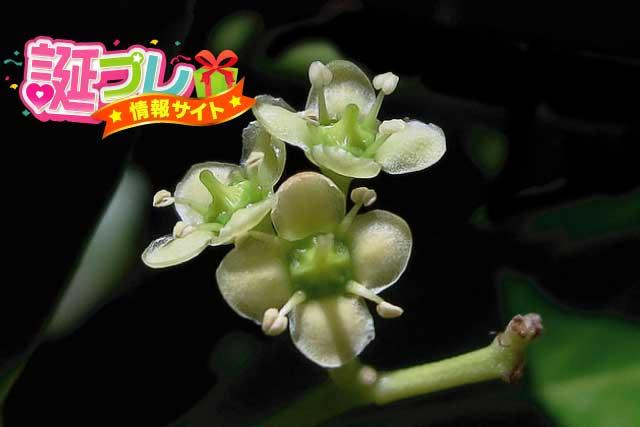柾の花の画像