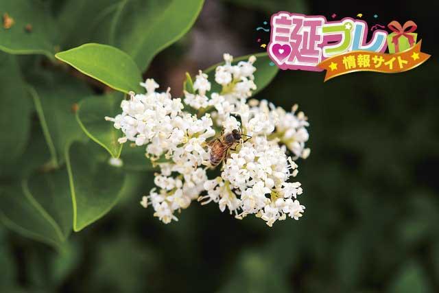 カノコソウの花の画像