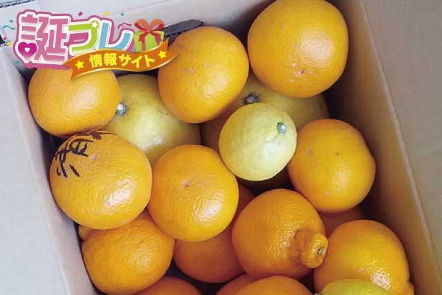 清見オレンジの画像