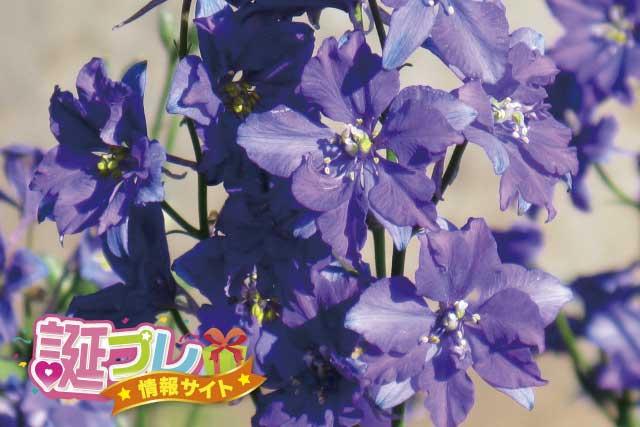 ラークスパーの花の画像