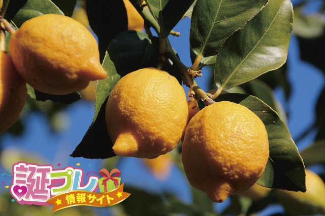 レモンの花の画像