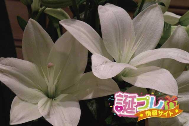 マドンナリリーの花の画像