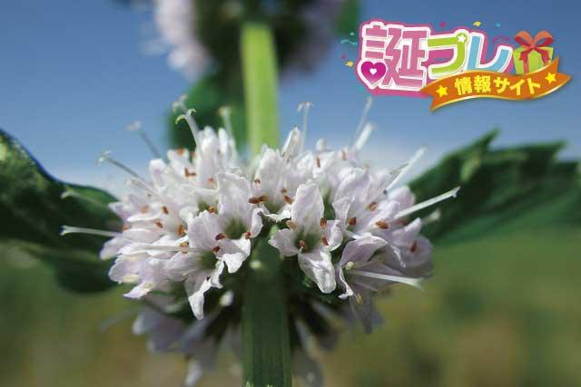 ミントの花の画像