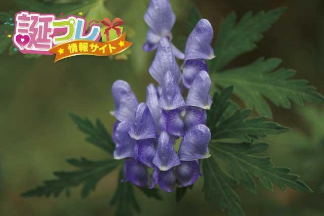 トリカブトの花の画像