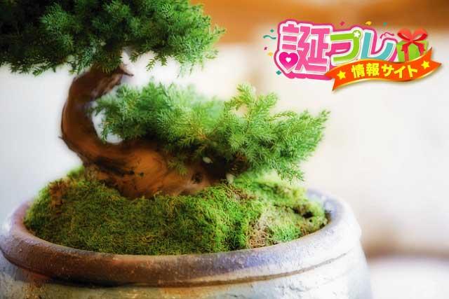 苔盆栽の画像