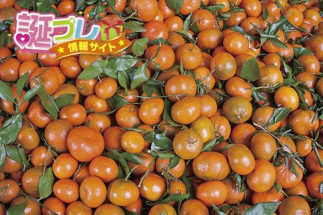 マーコットオレンジの画像