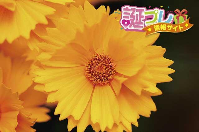 ハルシャギクの花言葉 | 誕プレ