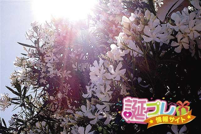 夾竹桃の画像