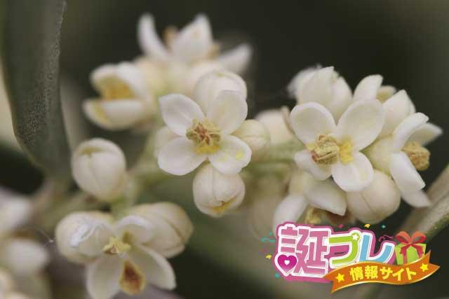 オリーブの花の画像
