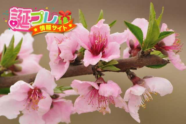 ピンク色の桃の画像
