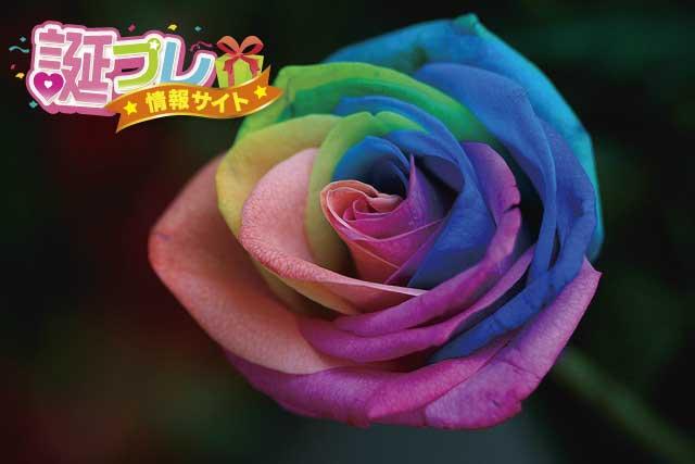 虹色の薔薇の画像
