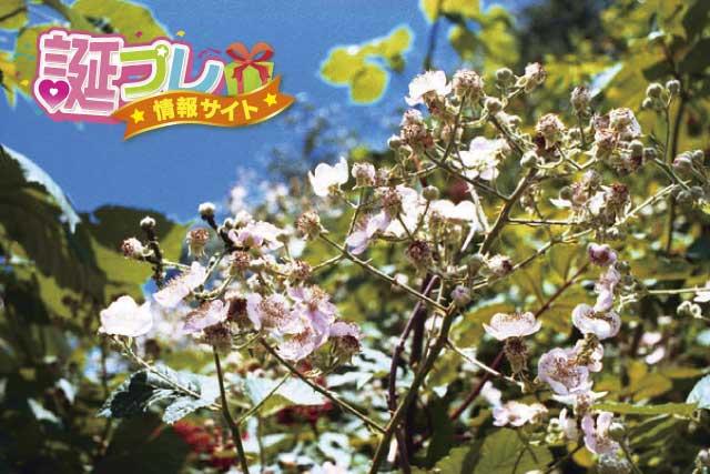 ラズベリーの花の画像