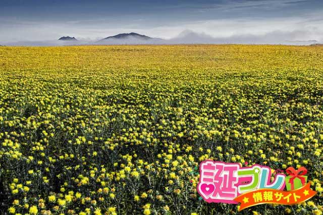 紅花畑の画像