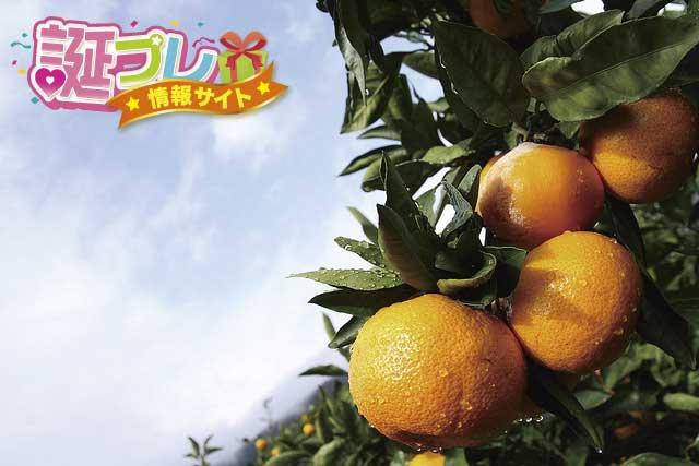 蜜柑の画像