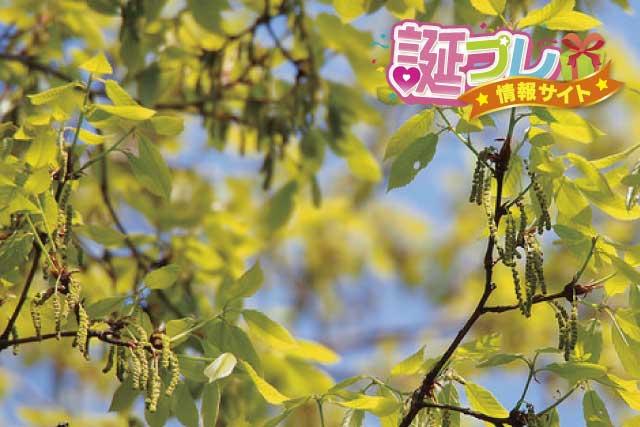 コナラの花の画像