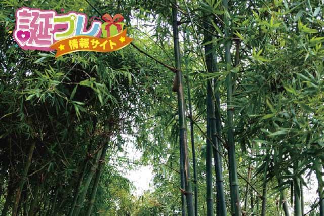四方竹の画像