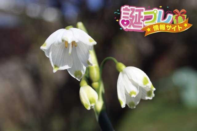 スノーフレークの花の画像