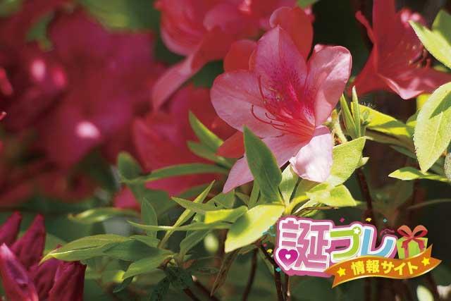 ヤマツツジの花の画像