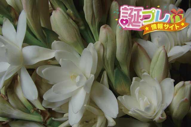 チューベローズの花の画像