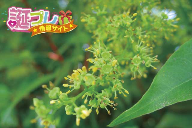 ハゼノキの花の画像