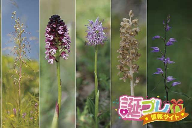 野生ランの花の画像