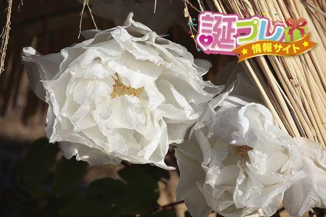 寒牡丹の花の画像