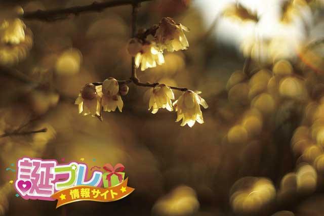蝋梅の画像