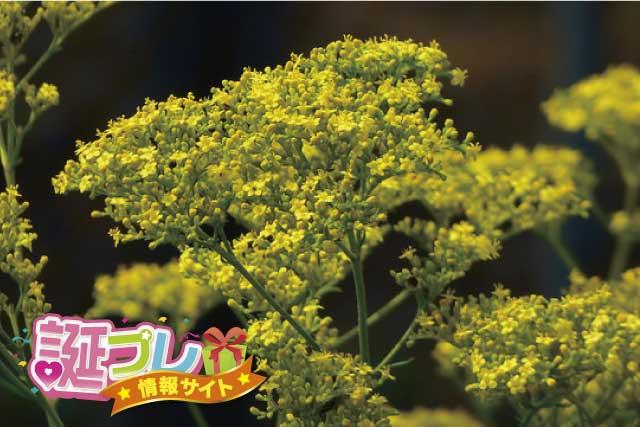 女郎花の花の画像