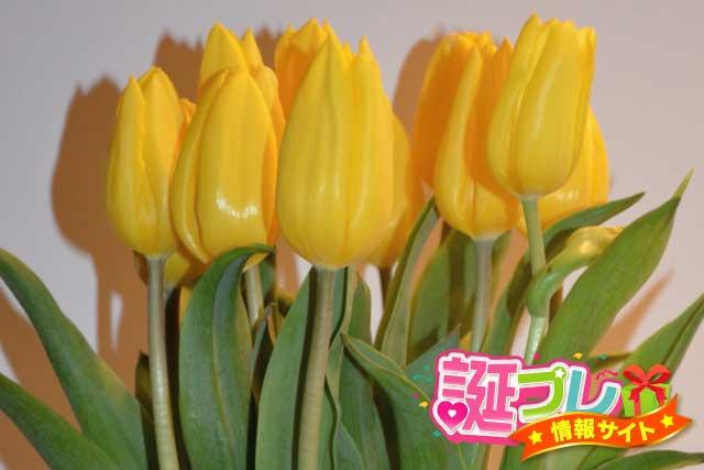 黄色のチューリップの画像