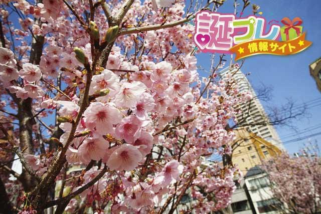陽光桜の画像