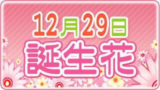 【12/29生まれ必見】12月29日の誕生花は全部で2種類
