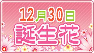 【12/30生まれ必見】12月30日の誕生花は全部で2種類