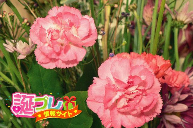 ピンク色のカーネーションの画像