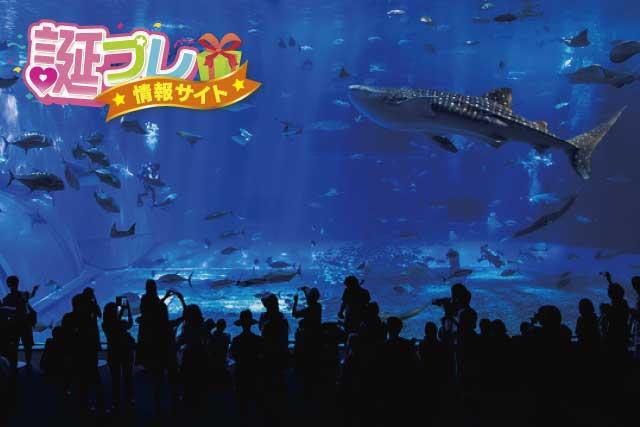 ちゅら海水族館の画像