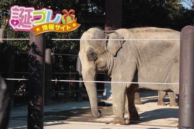 上野動物園の象の画像