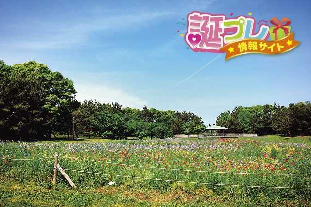 葛西臨海公園の花畑の画像
