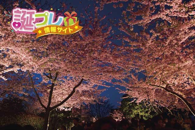 なばなの里の桜の画像