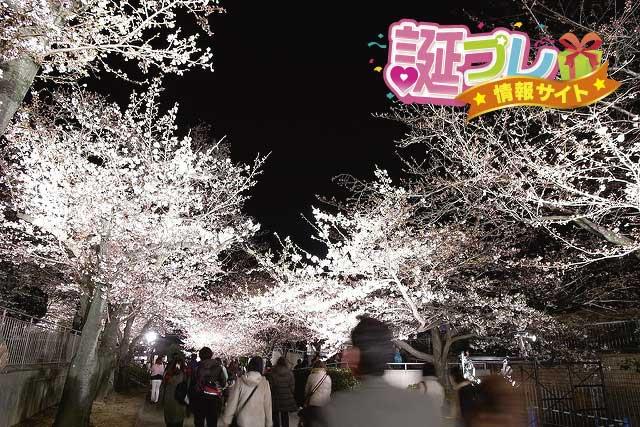 王子動物園の夜桜の画像